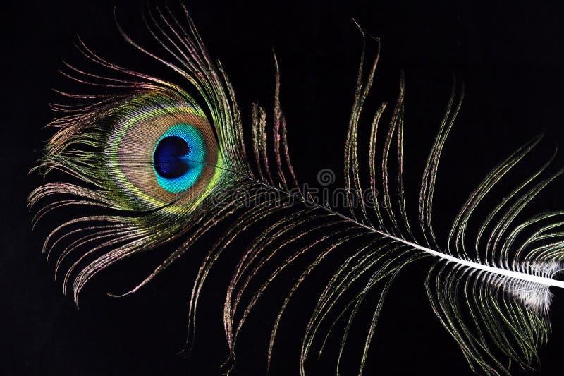 Pena colorida do pavão no preto foto de stock royalty free