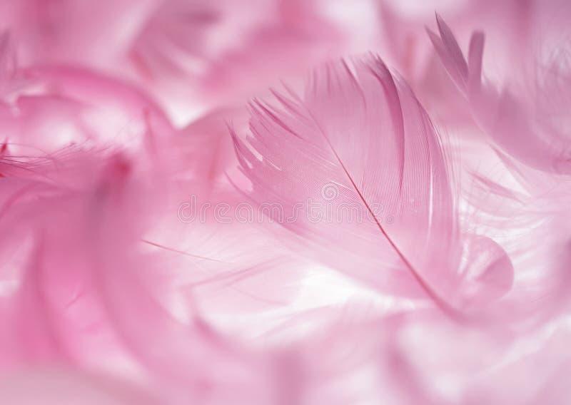 Pena cor-de-rosa imagens de stock