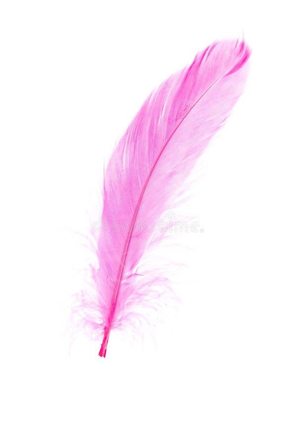 Pena cor-de-rosa fotos de stock royalty free
