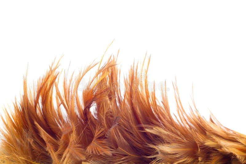 Pena da galinha imagens de stock