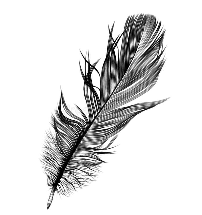 Pena de pássaro quill Desenho de lápis ilustração do vetor