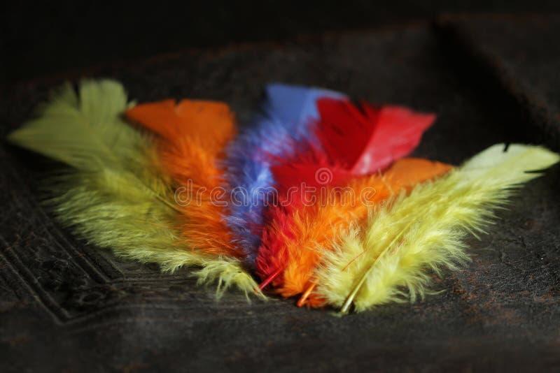 Pena de pássaro rasa colorida fotos de stock