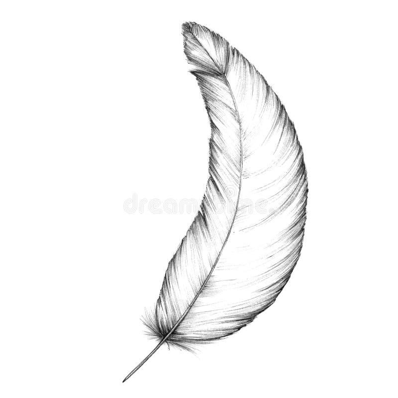Pena de um pássaro ilustração do vetor