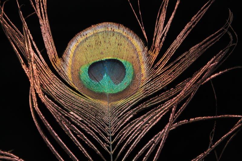 Download Pena do pavão foto de stock. Imagem de cores, macro, luxo - 26504442