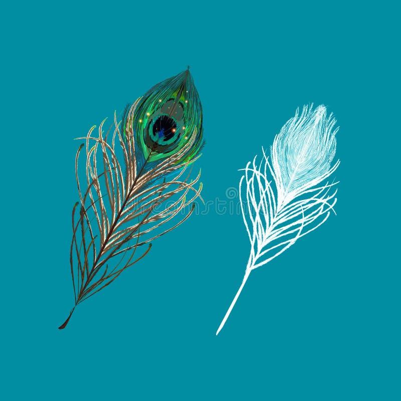 Pena do pavão em um fundo branco Ilustração do vetor ilustração royalty free