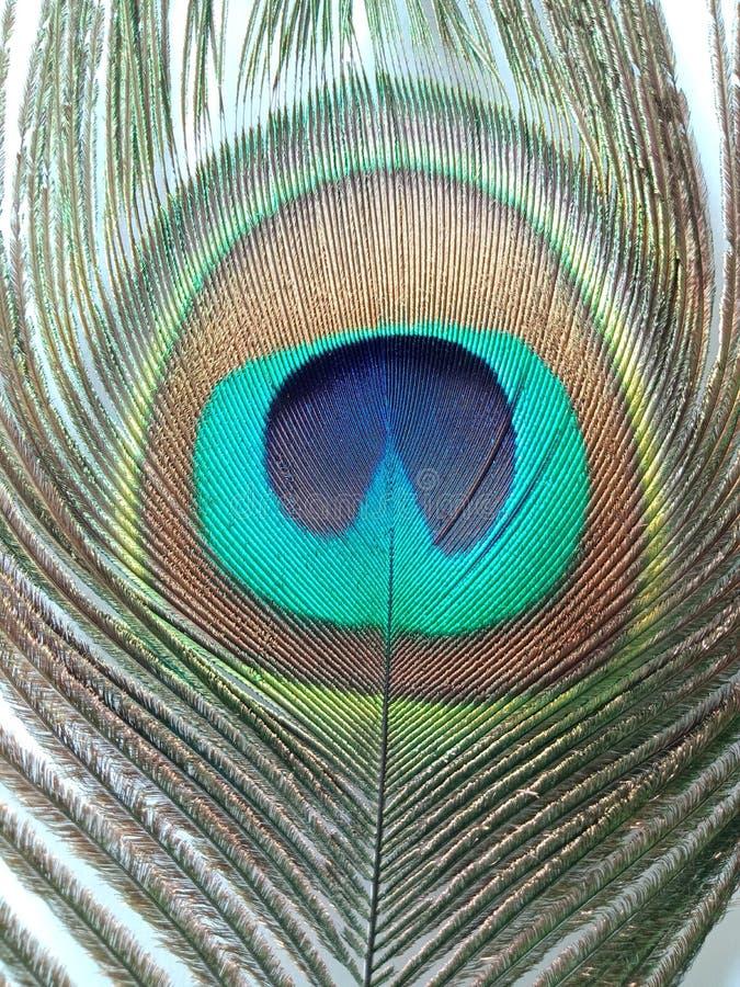 Pena do pavão, fim acima de detalhado foto de stock royalty free