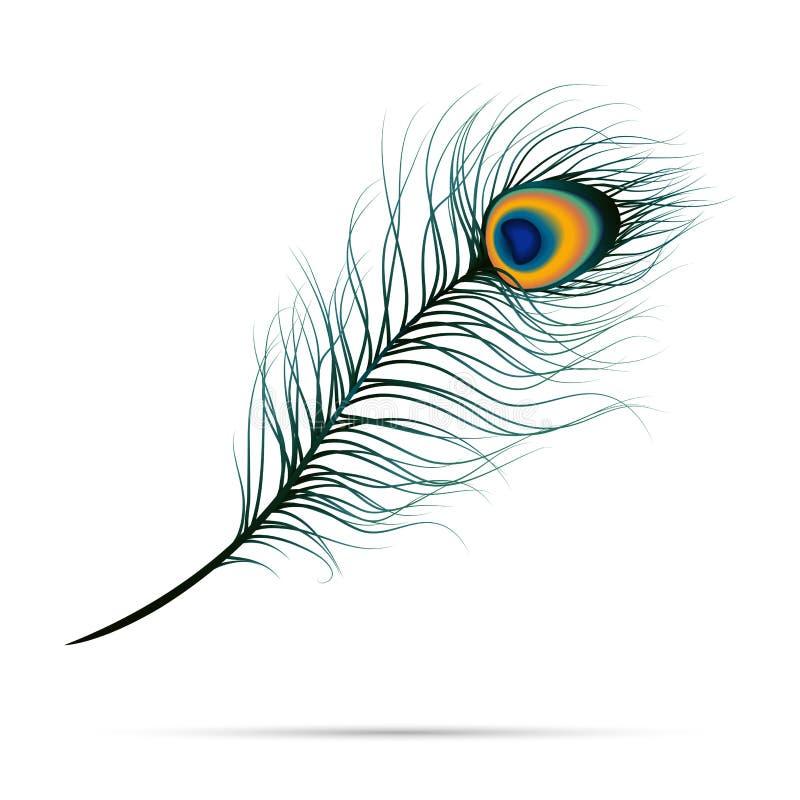 Pena do pavão no fundo ilustração do vetor