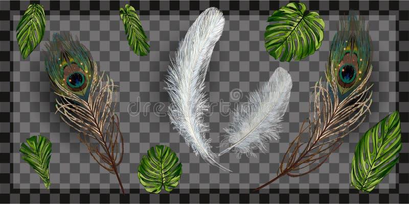 Pena do pavão no fundo transparente na ilustração realística do vetor do estilo molde do projeto, folheto, cartaz de incandescênc ilustração do vetor