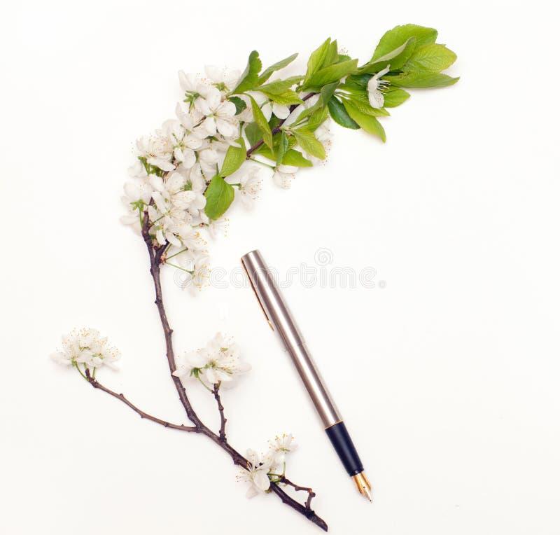 Pena e flores de cerejeira fotografia de stock