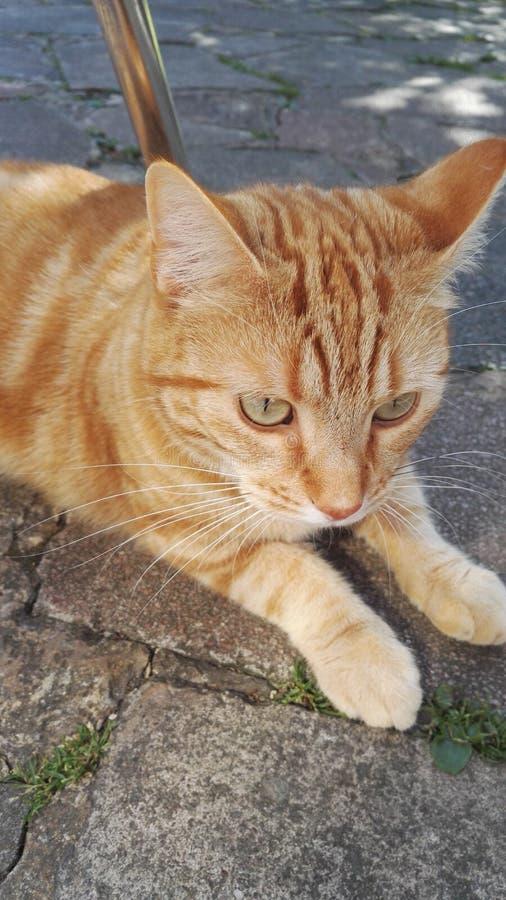 Pena estrelando do gato em povos fotos de stock
