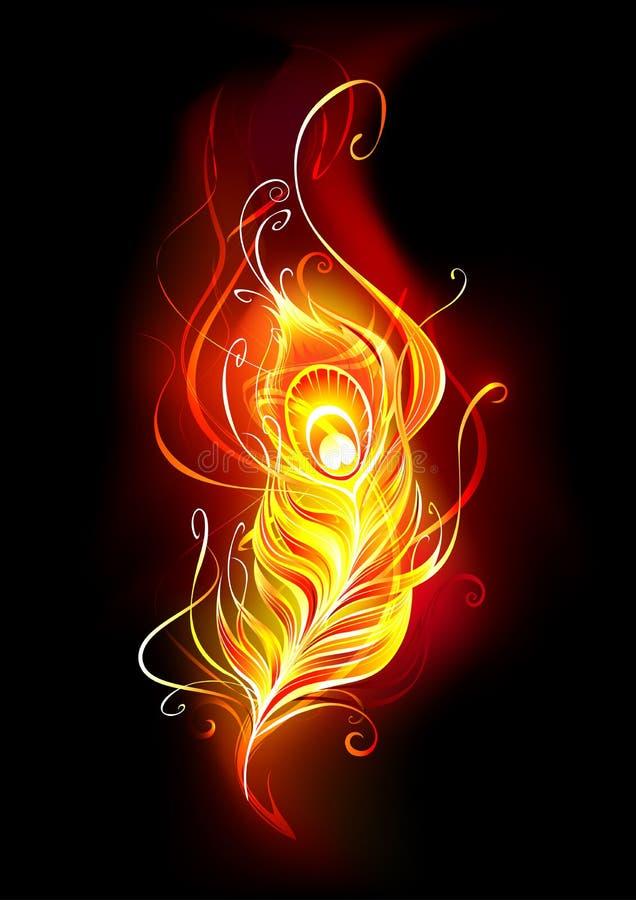 Pena impetuosa da pena do pavão do fogo ilustração royalty free