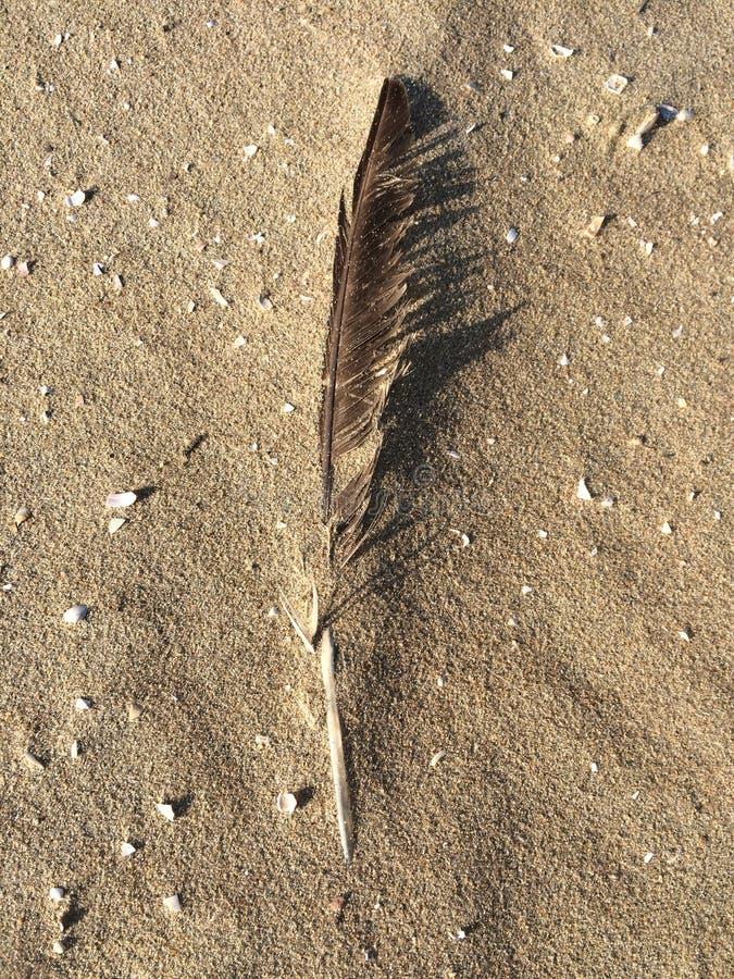 Pena na areia com shell imagem de stock royalty free
