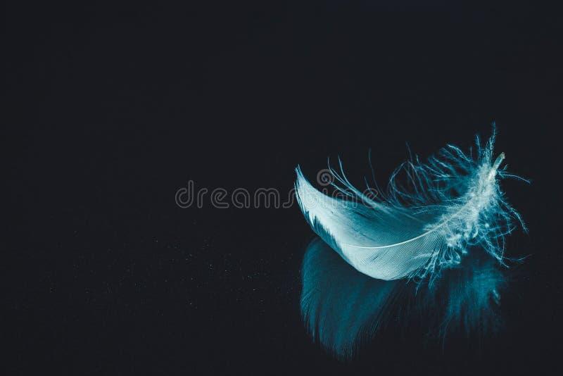 Pena no fundo de superfície espelhado preto fotografia de stock royalty free