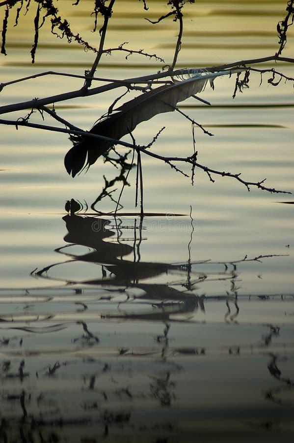 Pena perdida sobre um rio no por do sol fotografia de stock royalty free