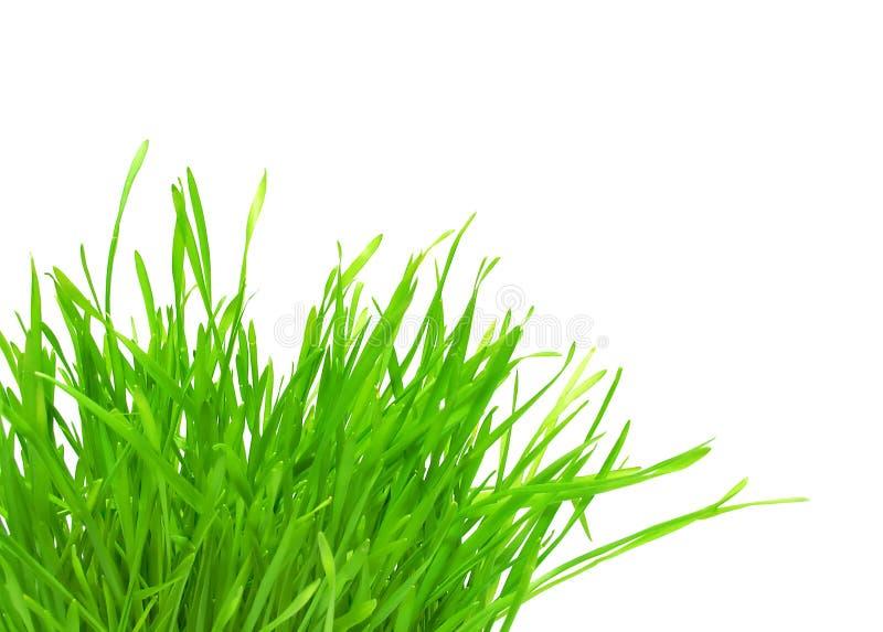 Penacho De La Hierba Verde Imagen de archivo libre de regalías
