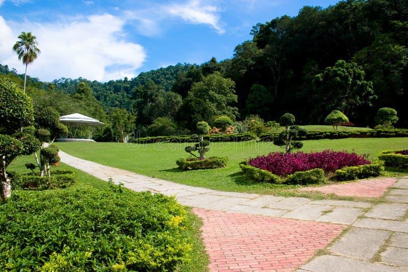 Download Penang Botanical Gardens stock image. Image of greens - 3208061