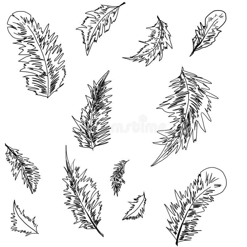 Penas bonitas Preto-branco, teste padrão foto de stock