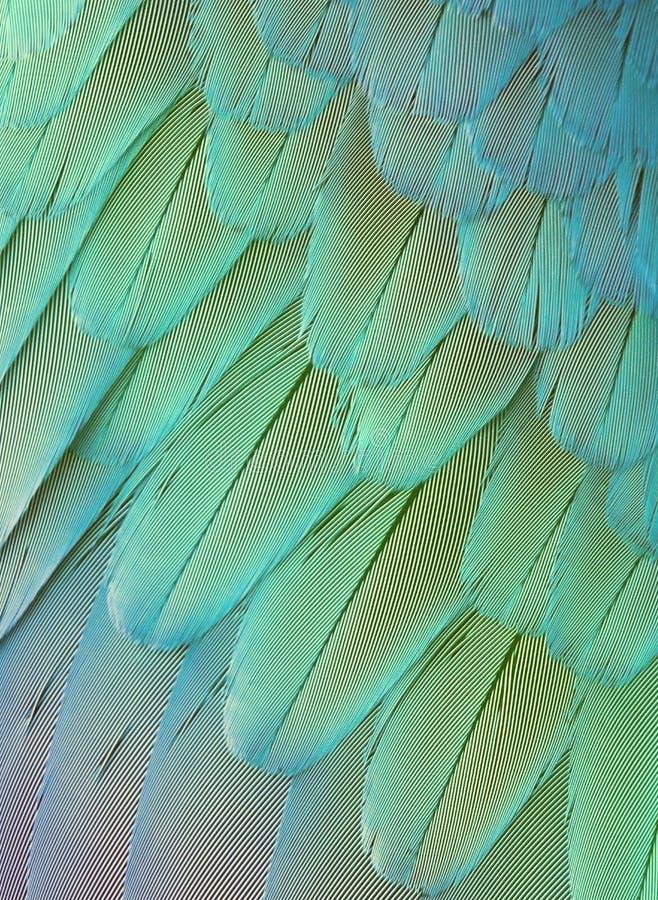Penas brilhantes do papagaio