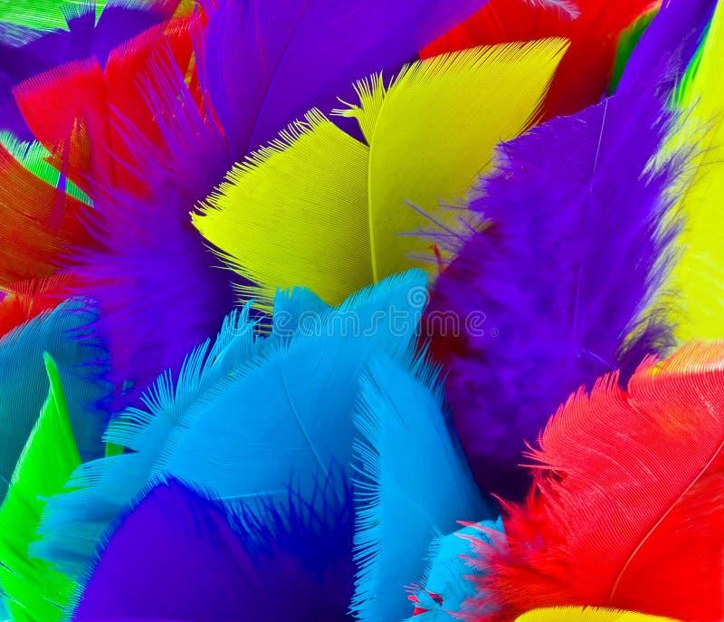 Penas coloridas Assorted fotografia de stock royalty free