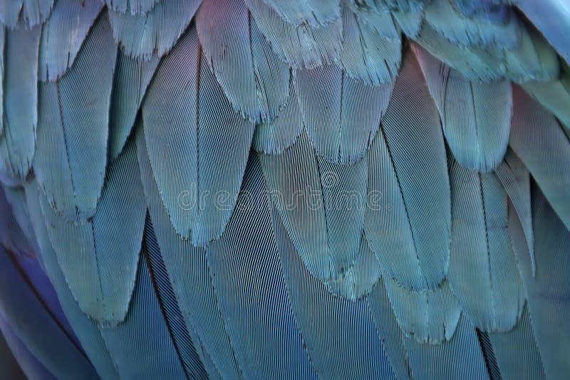 Penas coloridas do papagaio fotos de stock royalty free