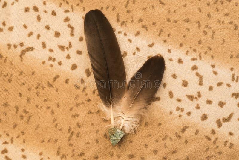 Penas de Eagle imagem de stock