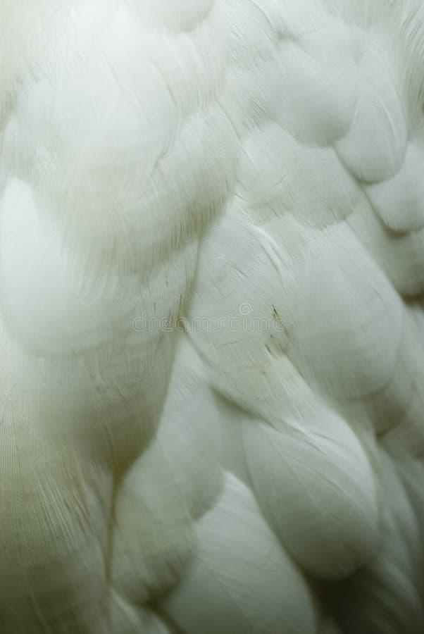 Penas do Egret imagem de stock