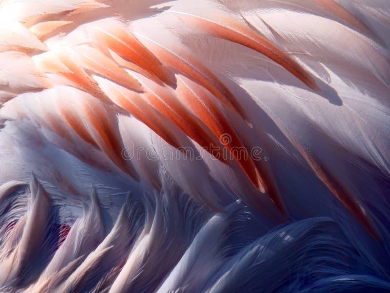 Penas do flamingo imagem de stock royalty free