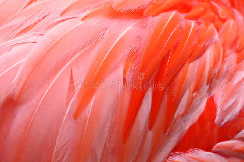 Penas do flamingo fotos de stock royalty free