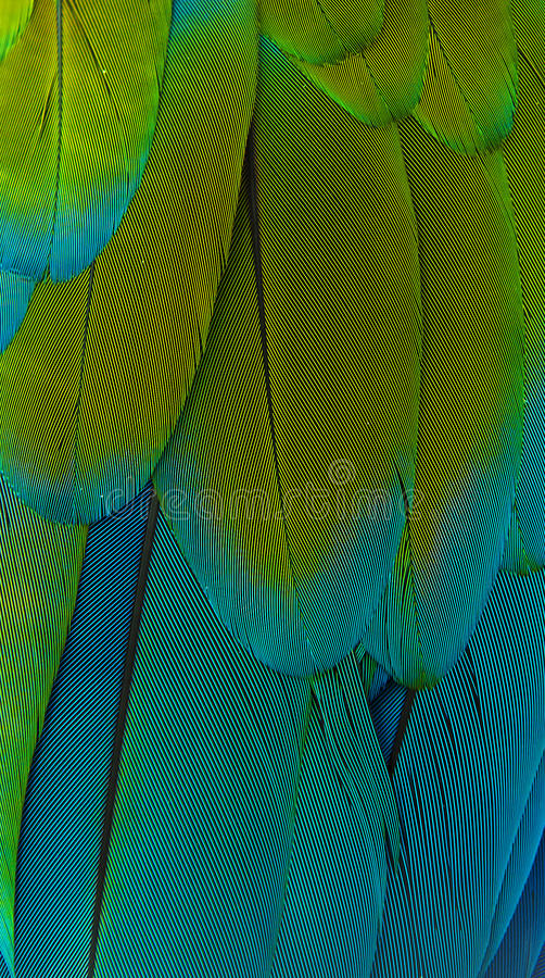 Penas do Macaw foto de stock royalty free