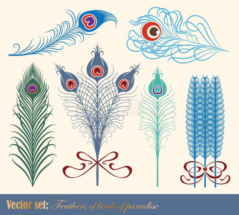 Penas dos pássaros de paraíso ilustração do vetor