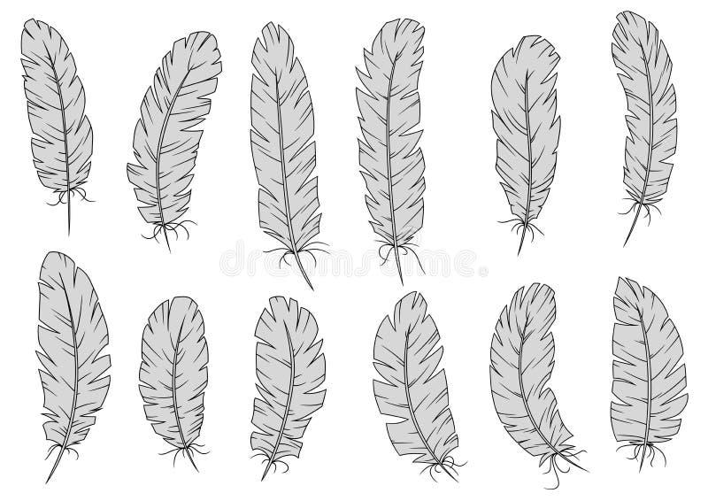 Penas e penas de pássaro antigas ilustração stock
