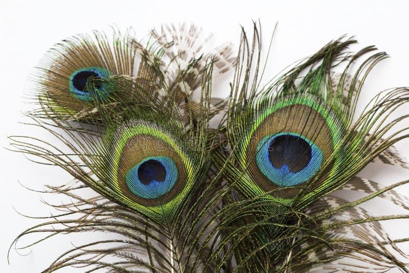 Penas exóticas bonitas do pavão imagens de stock royalty free