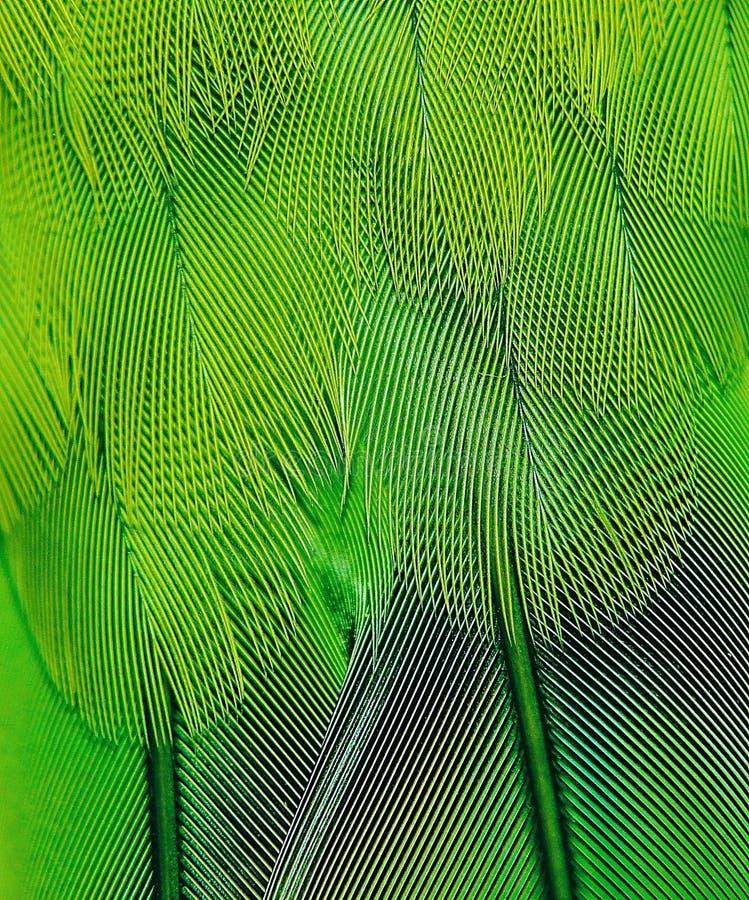 Penas verdes do papagaio pequeno fotografia de stock royalty free