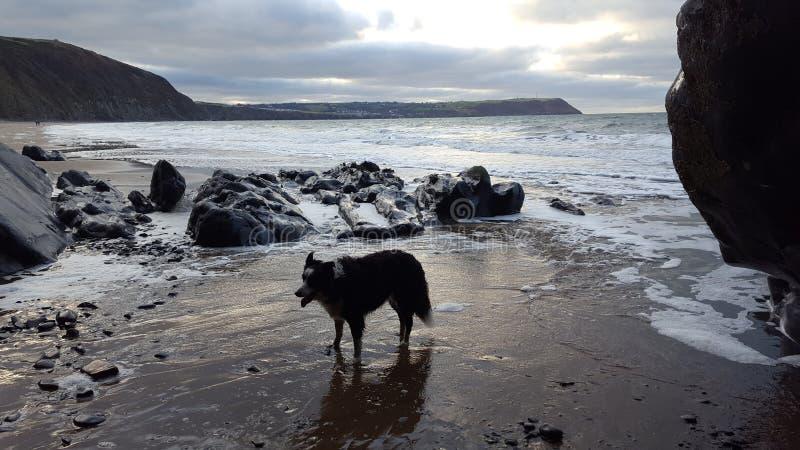 Penbryn beach royalty free stock photo