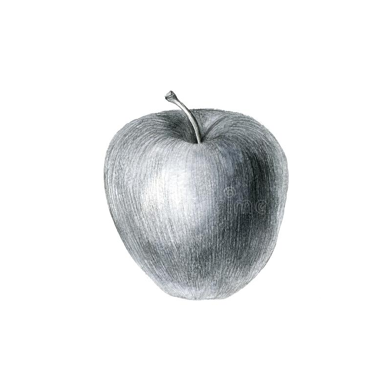 Pencil drawing apple. Isolated at white background, hand drawn botanical illustration stock images