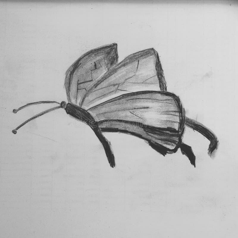 Butterfly sketch stock photo