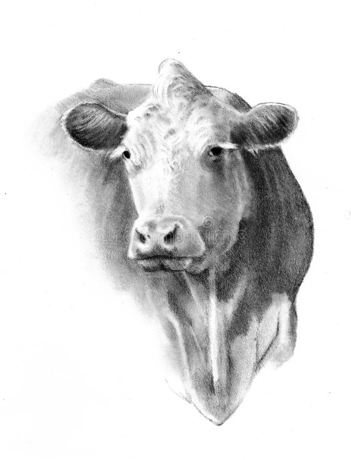 Pencil Drawing of Cow Head stock illustration