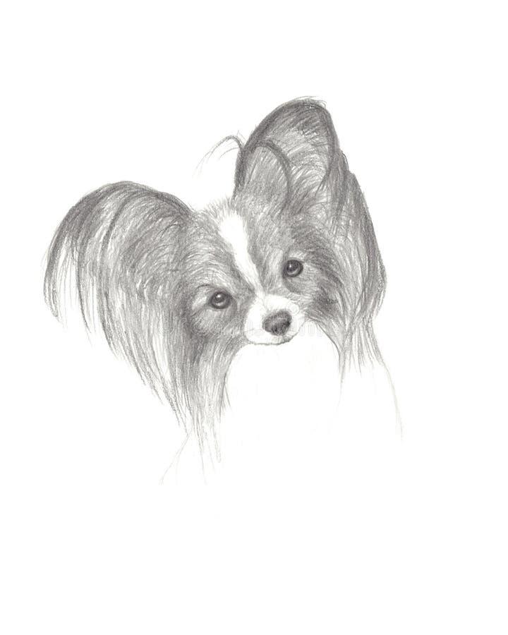 Fantastic Papillon Canine Adorable Dog - pencil-drawing-cute-papillon-dog-13618156  Picture_314255  .jpg