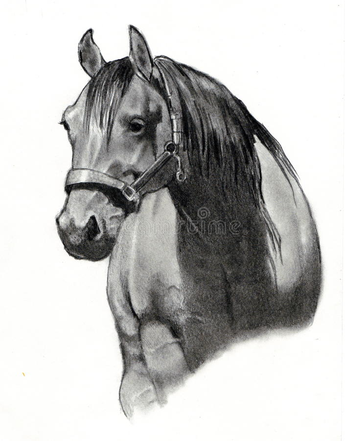 Pencil Drawing of Horse Head vector illustration