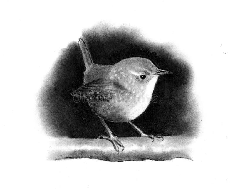 Pencil Drawing of a Little Wren