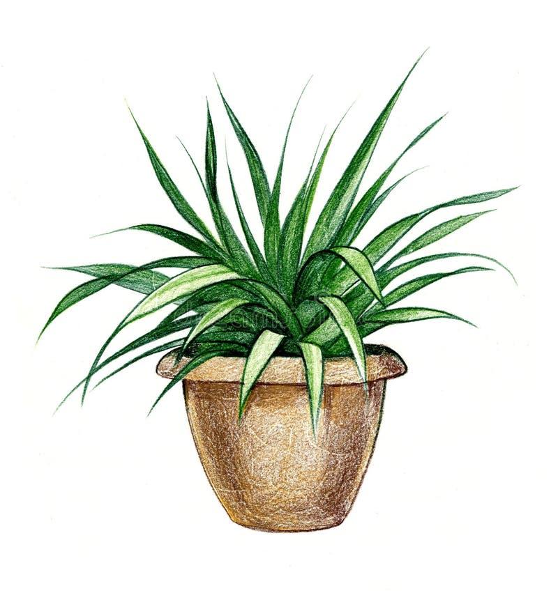 Pencil illustration of a flower. In a pot vector illustration