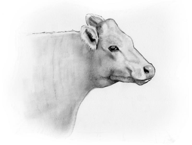pencil sketch of a cows head side view stock