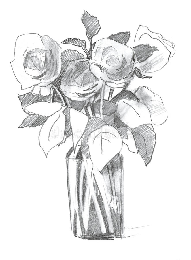 Download pencil sketch rose in vase stock illustration illustration of design 18863346