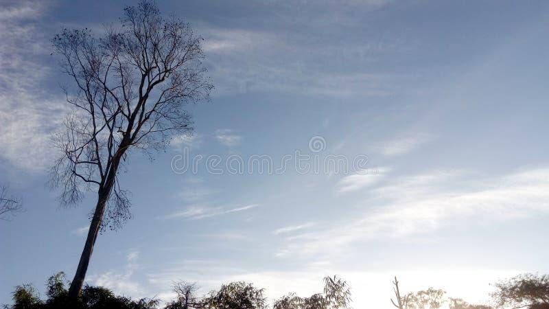 Pendant le matin de ciel photo libre de droits