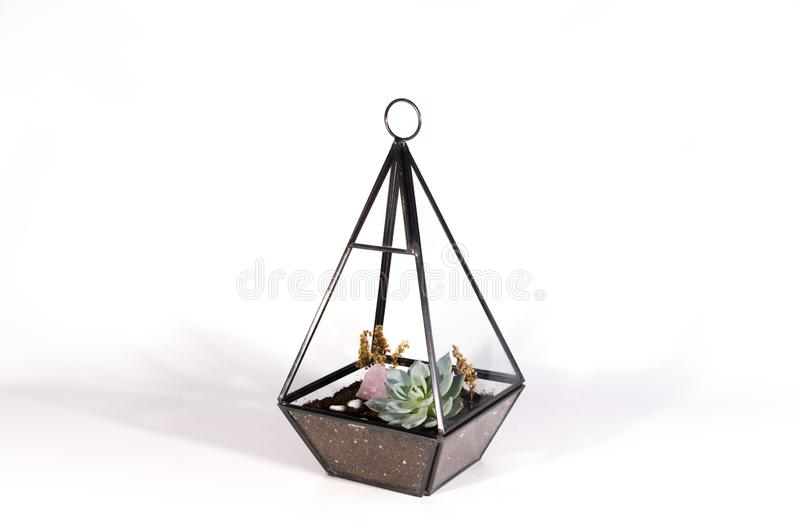 Pendant terrarium with succulents on a white background royalty free stock photos