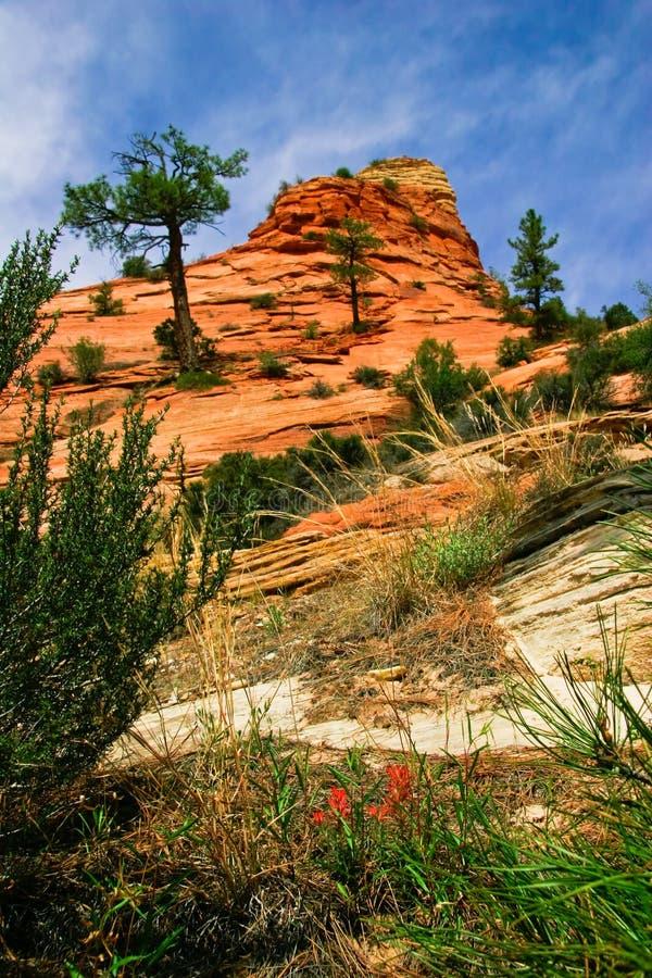 Pendii del canyon di Zion immagine stock libera da diritti