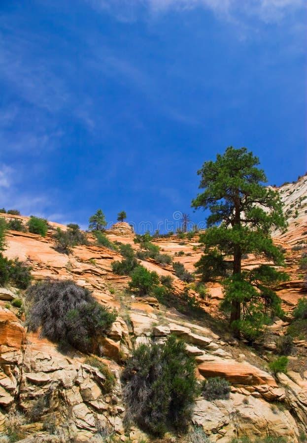 Pendii del canyon di Zion fotografie stock libere da diritti