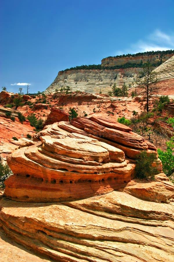Pendii del canyon di Zion. L'Utah. Gli S.U.A. fotografia stock libera da diritti
