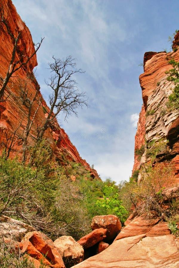 Pendii del canyon di Zion l'utah U.S.A. fotografia stock libera da diritti