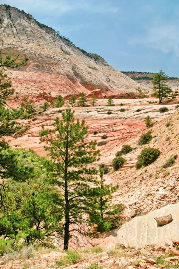 Pendii del canyon di Zion l'utah U.S.A. immagine stock